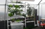 Huertas caseras hidropónicas verticales