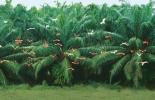 La palma de aceite está presente en la vida cotidiana de los colombianos./Foto:Archivo