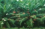 El precio del aceite de palma en Julio de 2012 alcanzó a estar en US$952.