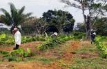 Con esta técnica se logró mejorar la calidad física, química y biológica del suelo. Foto: Agencia de Noticias UN.