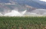 El 54% de la demanda del agua para el desarrollo en el país pertenece al sector agrícola. Foto: Gobernación del Tolima.