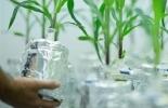 Centro de Desarrollo Agrobiotecnológico, Centro de Desarrollo Agrobiotecnológico en Antioquia, gobernación de antioquia, universidad de antioquia, biotecnología antioquia, agricultura, agricultura antioquia, producción agrícola en antioquia, ganadería, ganadería colombia