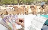 Factura electrónica, normas tributarias, crisis económica de ganaderos, devastación del clima, desventajas estructurales, conocimiento tributario, requerimiento tributario, ONtexto ganadero, noticias de ganadería colombiana.