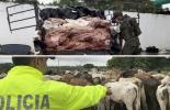 Aprehensiones de ganado bovino y de carne, Polfa, ganado ilegal, carne de dudosa procedencia, decomiso, Contexto Ganadero, noticias de ganadería colombiana.