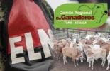 Robo de ganado en Arauca 2018, abigeato en Arauca, Comité de Ganaderos del Municipio de Arauca, contrabando de ganado en Arauca, masivo robo de ganado en Arauca, ganado robado por el ELN, contrabando de ganado desde venezuela, contrabando de carne desde Venezuela, Ganadería, ganadería colombia, noticias ganaderas, noticias ganaderas colombia, CONtexto ganadero