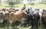 Cinco factores del negocio ganadero, sector de la carne es vibrante en el mundo, agenda de la ganadería, gestión, agricultura de pastos, manejo, sostenibilidad, ciclo corto del ganado, CONtexto ganadero, noticias de ganadería colombiana.