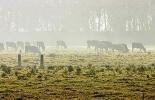 Heladas, cambio climático, verano, altas temperaturas, pasturas afectadas, pasturas sin poder nutritivo, Cundinamarca y Boyacá, disminución productiva, CONtexto ganadero, noticias de ganadería colombiana.