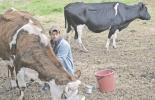 Valle de Ubaté, expectativa, heladas, factores climáticos, precio pagado al productor, CONtexto ganadero, noticias de ganadería colombiana.