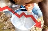 Seis factores que afectan ganaderías de Corozal, extenso verano, trashumancia, reducción productiva, aumento de precios, enfermedades, enfermedad Huequera, Contexto ganadero, noticias de ganadería colombiana.