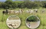 No he sentido el efecto de El Niño, ganadería del Quindío, Valle de Cocora, esquemas silvopastoriles, implementación de árboles, cercas vivas, sombra, cuidado del agua, Proyecto Ganadería Colombiana sostenible, CONtexto ganadero, noticias de ganadería colombiana.