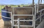 precio leche, leche $1.400, mejorar producción leche, calidad leche, sólidos totales, producción leche, Las Delicias, producción leche Santander, producción leche Colombia, costos producción leche, pago litro de leche, rendimiento productivo leche, Ganadería, lechería, comprar ganado Jersey, Venta de ganado, venta de bovinos, CONtexto ganadero, ganaderos colombia, noticias ganaderas colombia