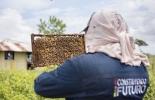 miel de abejas, Arauca, Ecuador, exportaciones, Alianzas Productivas, apicultura, Tame, productores, diversificación, insectos, comercialización, Ganadería, ganadería colombia, noticias ganaderas colombia, CONtexto ganadero