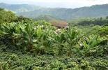 Ganadería, ganadería colombia, noticias ganaderas, noticias ganaderas colombia, CONtexto ganadero, Risaralda, desarrollo productivo risaralda, proyectos agro de risaralda, Gobernación de Risaralda, proyectos regalías risarada