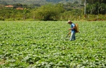 Ganadería, ganadería colombia, noticias ganaderas, noticias ganaderas colombia, CONtexto ganadero, Subsidios ganaderos, subsidios productores, subsido transporte, fedegan, programas fedegán, transporte productos agrícolas