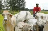 Ganadería, ganadería colombia, noticias ganaderas, noticias ganaderas colombia, CONtexto ganadero, Sucre, agro sucre, reactivación económica sucre, ganadería sucre, ministerio de agricultura sucre, proyectos agro sucre, Gobernación de Sucre
