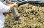Silos, maíz, Casanare, comité de ganaderos Yopal, gobernación de casanare, Alcaldía de Yopal, temporada seca, cosecha, Minagricultura, fedegan, maquinaria, Ganadería, ganadería colombia, noticias ganaderas colombia, CONtexto ganadero