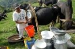 Ganadería, ganadería colombia, noticias ganaderas, noticias ganaderas colombia, CONtexto ganadero, precio de la leche, leche en boyacá, ganaderos de Boyacá, lechería boyacá, ganadería boyacá, precio insumos, precio de los insumos de la leche, precio de los concentrado