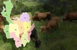 Ganadería, ganadería colombia, noticias ganaderas, noticias ganaderas colombia, CONtexto ganadero, Antioquia, ganadería antioquia, Ganaderos de Antioquia, centro de negocios ganaderos, Unidad de Információn y Análisis Agroeconómico y Ganadero, Unidad de Información y Análisis Agroeconómico y Ganadero en antioquia, clúster ganadero de antioquia, carne de antioquia, exportación de ganado desde antioquia, Gobernación de Antioquia, Secretaría de Agricultura de Antioquia, Rodolfo Correa