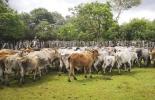 ganadería, ganadería colombia, noticias ganaderas, noticias ganaderas colombia, contexto ganadero, Yopal, seguridad en Yopal, hoja de ruta seguridad rural en Yopal, engranaje con autoridades para disminuir inseguridad, inseguridad en Yopal, carneo en Yopal, abigeato en Yopal