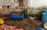 Ganadería, ganadería colombia, noticias ganaderas, noticias ganaderas colombia, CONtexto ganadero, Policía Metropolitana de Bucaramanga, Corporación Autónoma Regional para la Defensa de la Meseta de Bucaramanga, Cdmb, matadero clandestino, Distrito Regional de Manejo Integrado, matadero clandestino bucaramanga, cierre matadero clandestino en bucaramanga, matadero clandestino de burros en bucaramanga, burros para sacrificio clandestino,