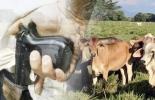 Ganadería, ganadería colombia, noticias ganaderas, noticias ganaderas colombia, CONtexto ganadero, Abigeato, carneo, Abigeato en el Cesar, carneo en el cesar, control abigeato en el cesar, control carneo en el cesar, inseguridad en el cesar, control inseguridad en el cesar, incautación de carne en el cesar, carne ilegal en el cesar