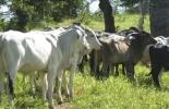 Ganadería, ganadería colombia, noticias ganaderas, noticias ganaderas colombia, CONtexto ganadero, clúster de Arauca, clúster cárnico de arauca, Ganadería Sostenible, sostenibilidad ganadera, clúster ganadería sostenible, avances en clúster de Arauca