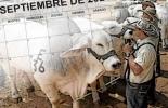Eventos ganaderos septiembre 2021, Eventos ganaderos 2021, feria ganadera Bucaramanga 2021, Congreso de Alimentación y Nutrición en ganado bovino de carne y leche, cursos ganaderos, eventos 2021, Expobrangus del Caribe, asociación angus y brangus, ganado bovino, ganadería bovina, carne, leche, ganaderos, ganaderos colombia, ganado, vacas, vacas Colombia, bovinos, Ganadería, ganadería colombia, noticias ganaderas, noticias ganaderas colombia, CONtexto ganadero, contextoganadero
