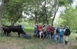 Ganadería, ganadería colombia, noticias ganaderas, noticias ganaderas colombia, CONtexto ganadero, caqueta, ganaderos del caqueta, ganaderia del caqueta, comité de ganaderos del caqueta, tecnigan caqueta, tecnigan florencia,