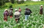La ganadería doble propósito, los cereales, y las frutas y hortalizas serán los primeros beneficiados. Foto: Archivo.