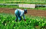 Gobierno Departamental y Asistencia Técnica Agropecuaria.jpg
