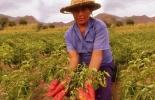 Valle del Cauca comprometido con mujeres rurales.jpg