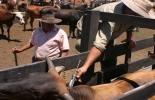 Con la capacitación se beneficiaron 347 ganaderos del departamento.