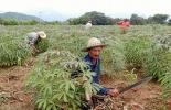 Cultivos en Nariño.