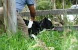 Vaca por la paz