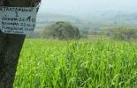Tecnología en ganadería de Santander