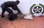 3.120 kilos de carne de res ilegal en Córdoba