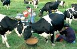 Conpes lácteo Boyacá