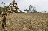 sequía y ganadería