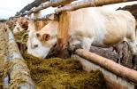 Ayuda a ganaderos afectados en Boyacá.jpg