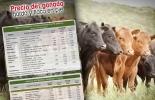 Precio del ganado, precio del ganado en colombia, subastas en colombia, subasta de ganado, subasta de ganado en colombia, precio del ganado noviembre, precio del ganado en Antioquia, precio de ganado en Bogotá, ganadería colombia, noticias ganaderas colombia, contexto ganadero