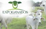 Expoganados Internacional, duplicaría exportaciones de ganado en pie, camino hacia Irak, autorizaciones de Egipto y Jordania, ganado en inventario, CONtexto ganadero, noticias de ganadería colombiana.
