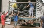 Colombia, Ministerio de Agricultura y Desarrollo Rural, fenómeno de El Niño, alimentación bovina, recursos para alimentación bovina, Contexto ganadero, noticias ganadera, vacas