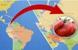 Colombia, exportaciones de Carne, Rusia, Exportaciones de carne colombiana a Rusia, Fiebre Aftosa, se avizora reapertura del mercado de la carne colombiana en Rusia, Contexto ganadero, noticias ganaderas, carne