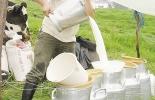 Colombia, mercado lácteo en 2018, producción, precios, bonificaciones, mercado informal de la leche, comparación de precio pagado al productor en Colombia vs precio internacional, CONtexto gandero, noticias ganaderas Colombia, leche