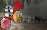 ganadería, ganadería colombia, noticias ganaderas, noticias ganaderas colombia, contexto ganadero, Organización de las Naciones Unidas para la Alimentación y la Agricultura, FAO, Ricardo Rapallo, oficial de Seguridad Alimentaria, productoslácteos, sequías, cereales, oleaginosas, productos lácteos, carnes y azúcar, peste porcinaafricana en Asia, Justin Sherrard, estratega global del sector cárnico de la consultora Rabobank, políticas arancelarias de Estados Unidos, verano, sequía,