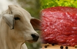 China, demanda de caren cecimientoi de la demanda por carne en china, peste porcina, CONtexto ganadero, noticias ganaderas de Colombia, bovinos