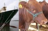 Colombia, China, exportaciones, devaluación en China, exportaciones de carne colombiana, Fedegán, José Félix Lafaurie Rivera, CONtexto ganadero, economía