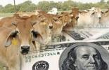 dólar, exportaciones, importaciones, insumos, carne, leche, lácteos, euro, divisas, Competitividad, contingentes, tasa de cambio, Vacunas, maquinaria, Alimentos, Ganadería, ganadería colombia, noticias ganaderas colombia, CONtexto ganadero