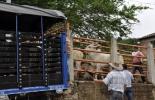 Colombia, apoyo al transporte, productores perecederos agrícolas y pecuarios, apoyo al transporte de productos perecederos agrícolas y pecuarios, Aliste los documentos para el pago del transporte de productos agrícolas y pecuarios, Bolsa Mercantil de Colombia, inscribirse en la Bolsa Mercantil de Colombia, cuenta de cobro de los apoyos al transporte, COVID-19, Pandemia, Programa de apoyo al transporte de productos perecederos agrícolas y pecuarios, Resolución 0131 de 2020, MADR, Ganadería, ganadería colombi