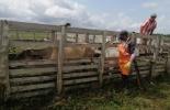 Fondo Nacional del Ganado, Fedegán, cuota de fomento ganadero y lechero 2021, fechas límite para consignar la cuota de fomento ganadero y lechero, entidades financieras para consignar la cuota de fomento ganadero y lechero, ganadería, ganadería Colombia, noticias ganaderas Colombia, Contexto ganadero